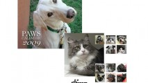 http://www.falconecreativedesign.com/wp-content/uploads/2014/02/Gallery-collateral-PAWS2-213x120.jpg